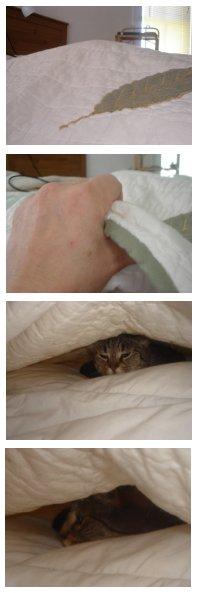 Move over, kitty. I feel the same way.